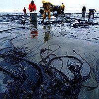 Восстановление экосистемы после утечки нефти BIOBAC