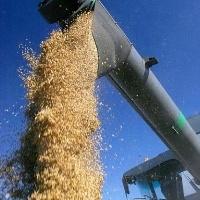 Метод очистки зерна в промышленности