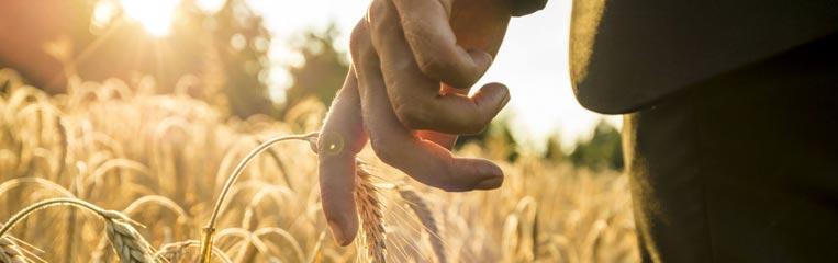Особенности ОПО страхования в сельском хозяйстве
