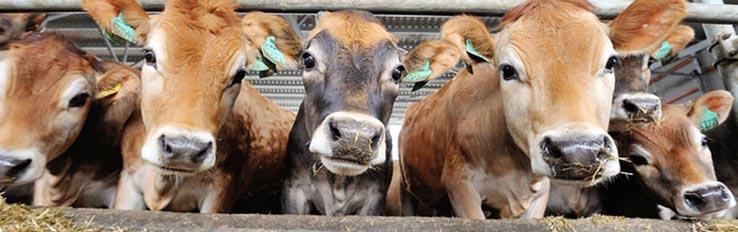 Охрана труда в животноводстве