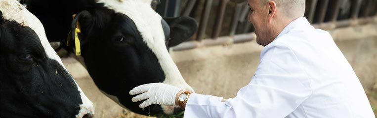 Основы производственной санитарии в животноводстве